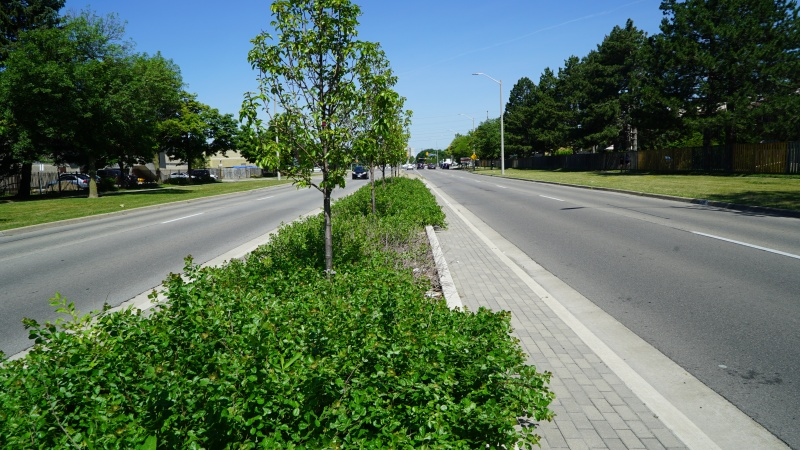 File:Central Parkway - soil cell, stormwater planter.JPG