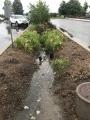 IMAX Bioretention Wet weather.JPG
