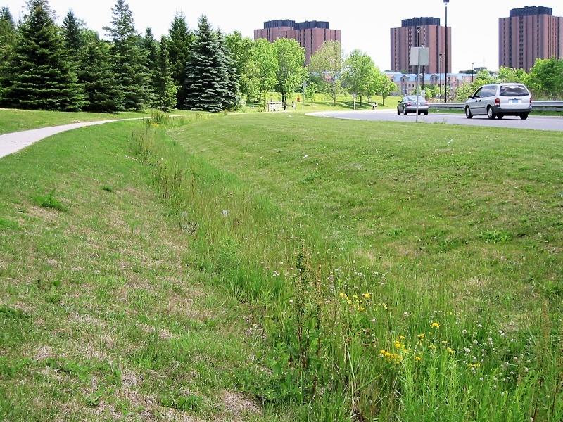 File:TRCA YorkU grass swale 3.jpg