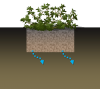 Rain Garden Schematic.png