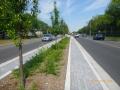 Central Parkway Mississauga After retrofit Silva Cells.JPG
